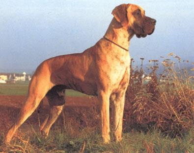 http://www.dog-katalog.ru/dog/k75.jpg